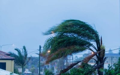 5 Tips to Protect Your Home from Wind Damage